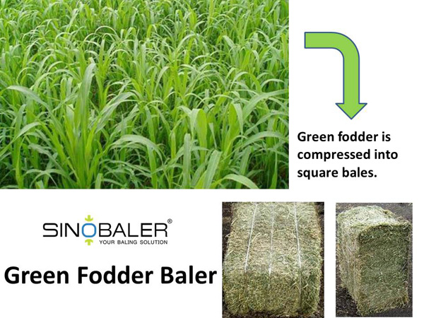 Green Fodder Baler