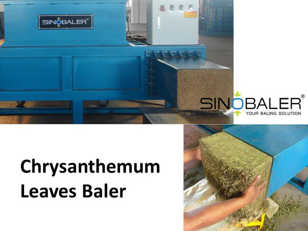Chrysanthemum Leaves Baler / Chrysanthemum Leaf Baler