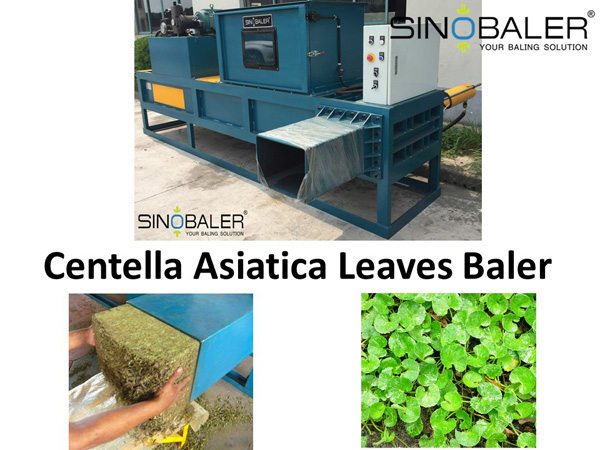 Centella Asiatica Leaves Baler / Centella Asiatica Leaf Baling Machine